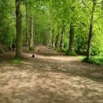 shady-forest-path-1444495-m